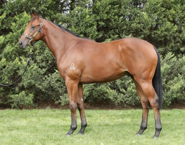Acrophobic as a yearling