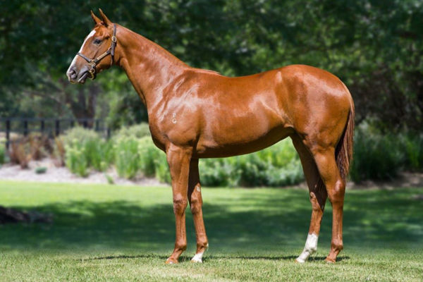 Agreeable was a $125,000 Inglis Premier Yearling