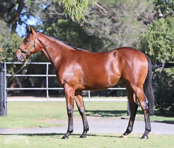 All Too Huiying a $150,000 Adelaide Magic Millions Yearling