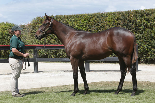 Half-brother to Toscanini by American Pharoah purchased by Moody Racing for $360,000