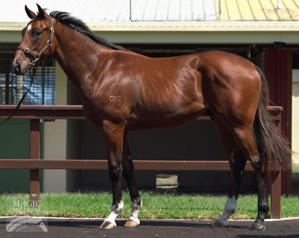 Apache Chase $50,000 well spent at the 2019 magic Millions March Yearling Sale