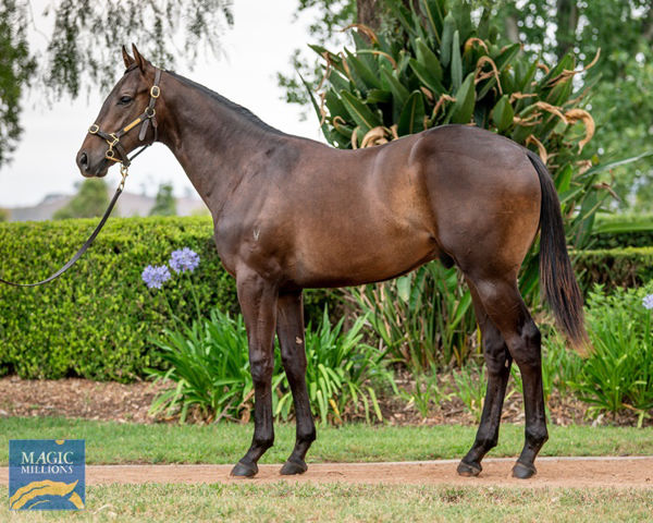 Artorius as a $120,000 Magic Millions yearling consigned by Vinery Stud.