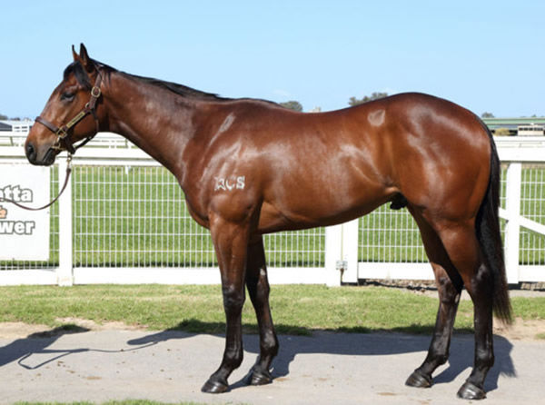 Aslav was an eye-catcher at the 2020 Inglis Ready 2Race Sale selling for $260,000.