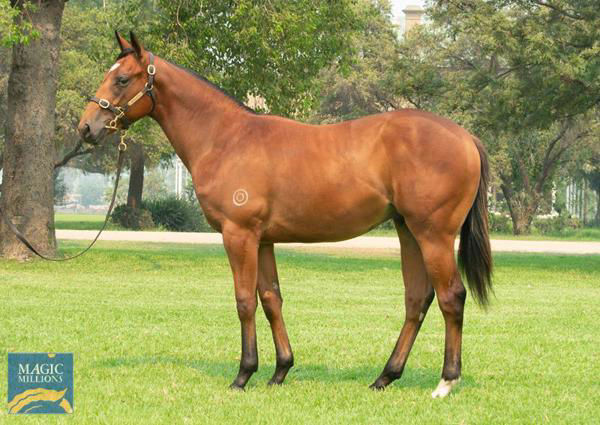Astrologer a $300,000 Magic Millions yearling