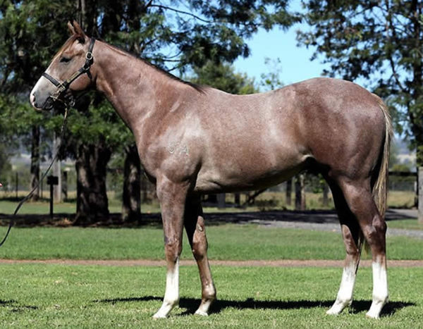 Aviator was a $290,000 Inglis Easter yearling pruchase.