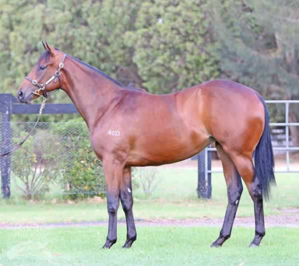Away Game as a yearling another success story for Mill Park