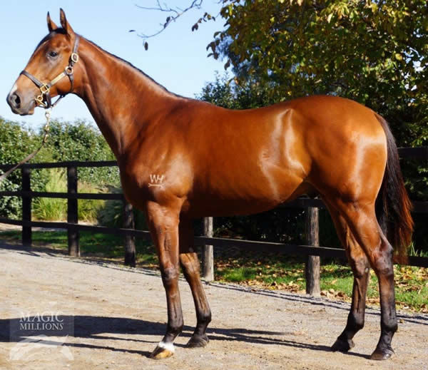Behemoth a $6,000 Magic Millions yearling