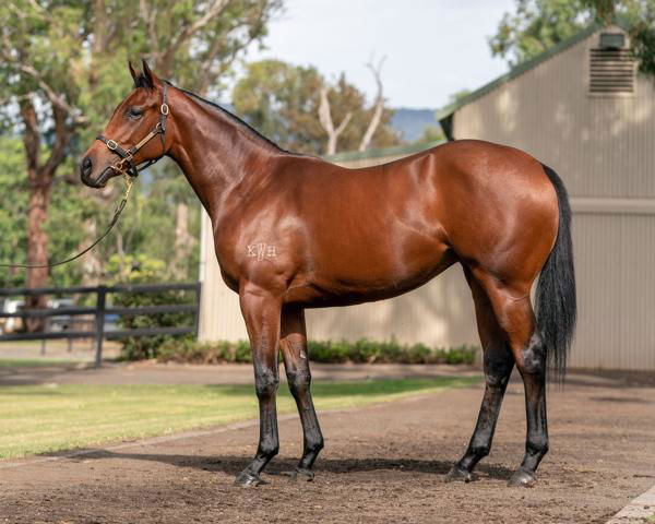 Billiondollarbaby a $1million Inglis Easter Yearling