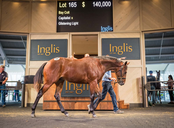 This $140,000 Capitalist colt was the star of the show on Sunday.