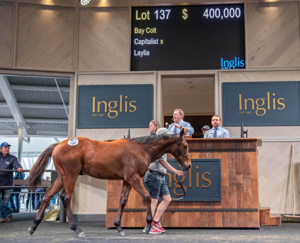 $400,000 Capitalist colt from stakes producer Laylia.