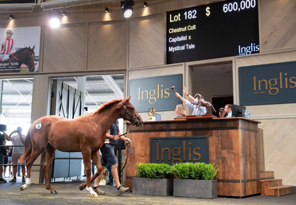 Record breaking $600,000 Capitalist colt from Mystical Tale.