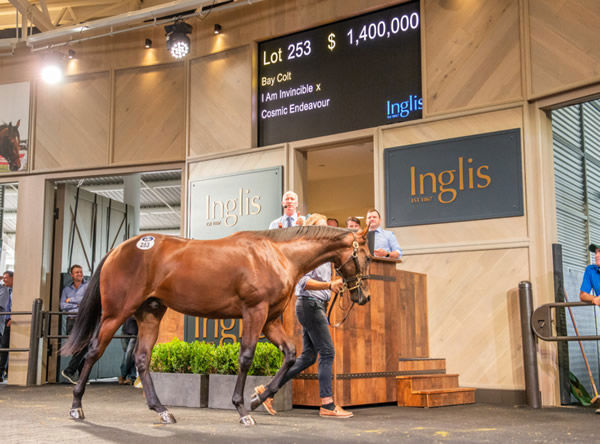 $1.4million I Am Invincible colt from dual G1 winner Cosmic Endeavour.