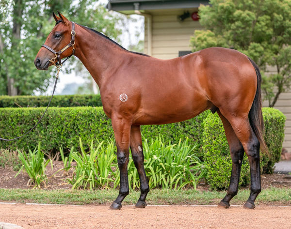 $700,000 I Am Invincible colt from G1 winner Risque.