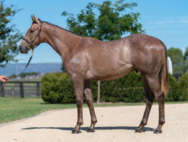 $220,000 Impending colt from Street Storm (USA).