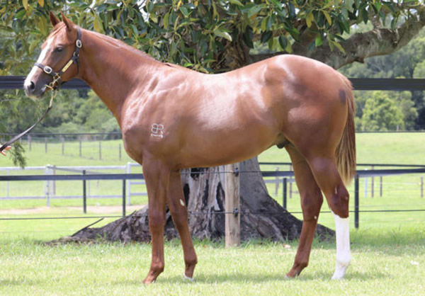 $375,000 Invader colt from Hussidora.