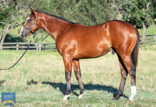 $550,000 Invader colt from Swan River.