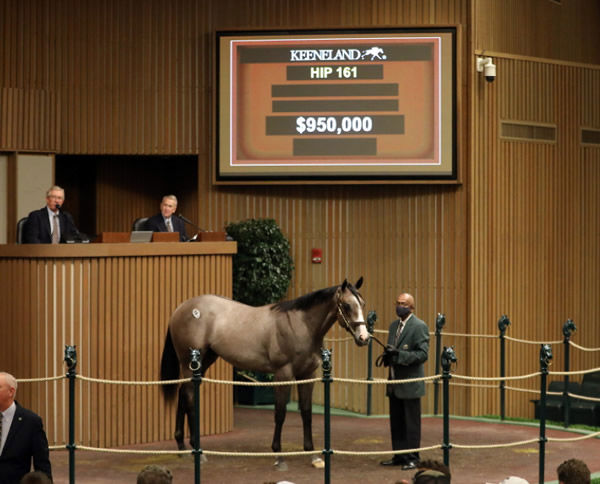 This $950,000 colt from Stayclassysandiego was the top seller for Justify in session 1.