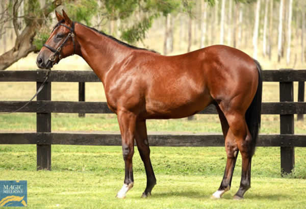 $250,000 Pariah colt from Amerindia (GB).