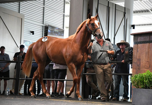 $2.5million Snitzel colt from Rising Romance
