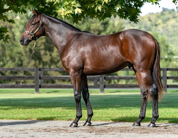 $1million So You Think colt from Martilago