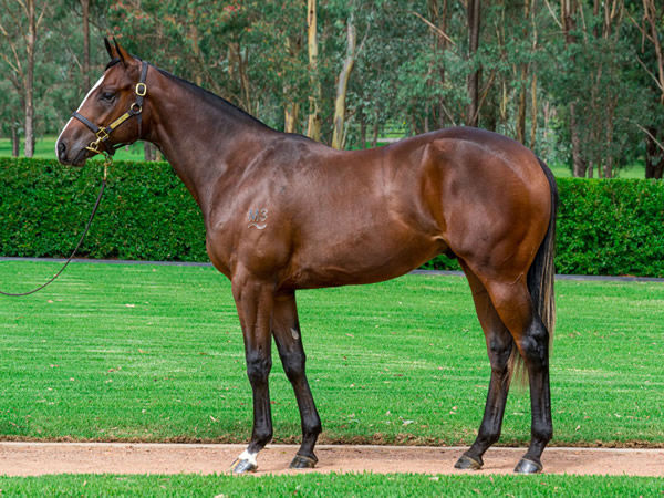 $1.1million Written Tycoon colt from Dream Play