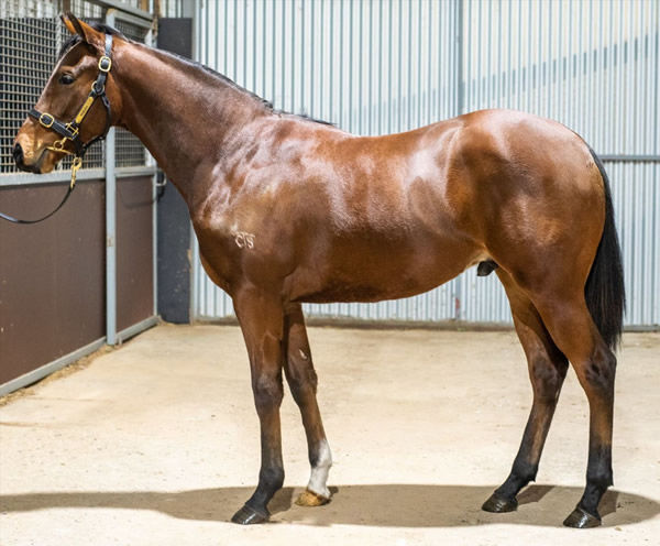 $120,000 Dundeel colt from Blessit