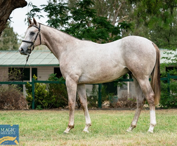 Lot 226 - full brother to Big Party