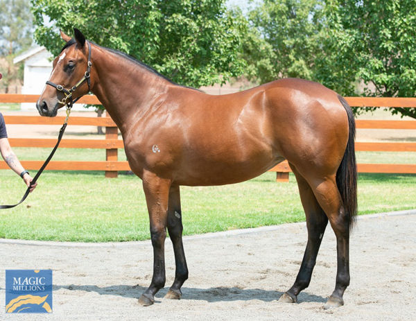 Centro Storico was a $410,000 Magic Millions yearling