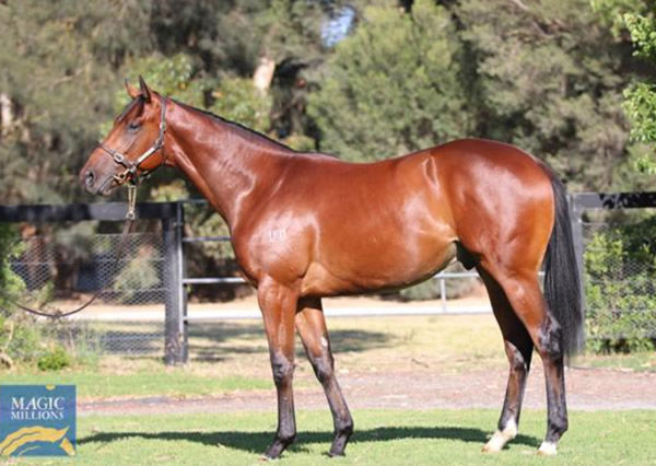 Cerberus was a $750,000 MM purchase from Mill Park.