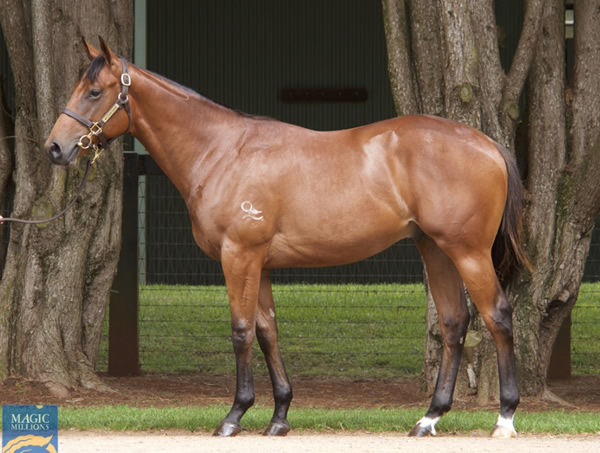 $400,00 Extreme Choice colt from Convention