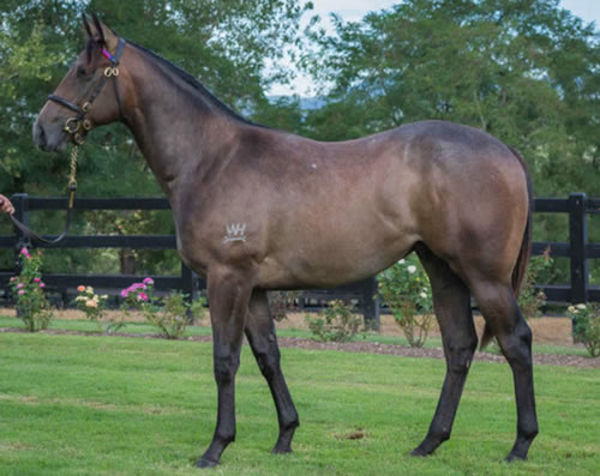 Classique Legend a $400,000 Inglis Classic yearling
