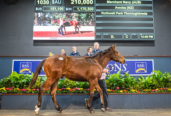 Top lot on Friday was this Merchant Navy colt.