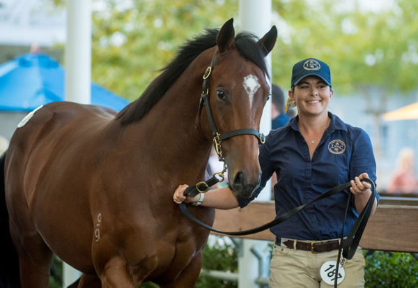 $1million Not a Single Doubt colt from Aloona sold by Lime Country - image Sharon Chapman.