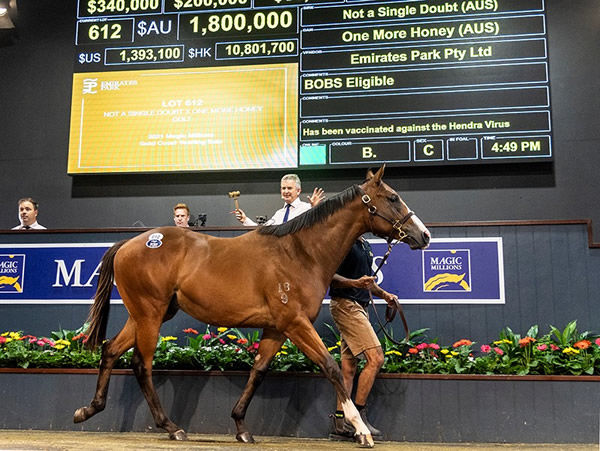Sold by Emirates Park, the $1.8 million Not a Single Doubt colt.