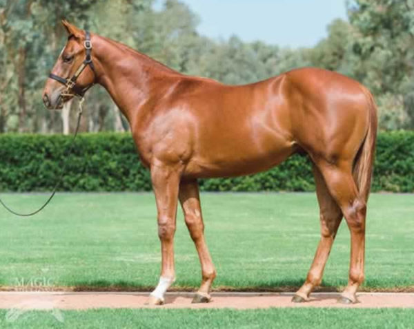 Concealed was a $310,000 Magic Millions purchase