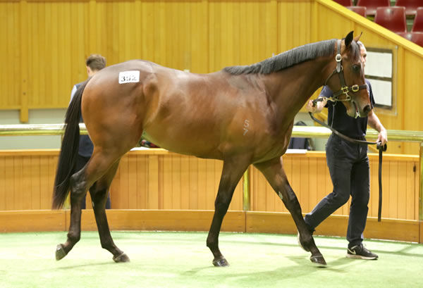 $330,000 Per Incanto colt from Dreaming