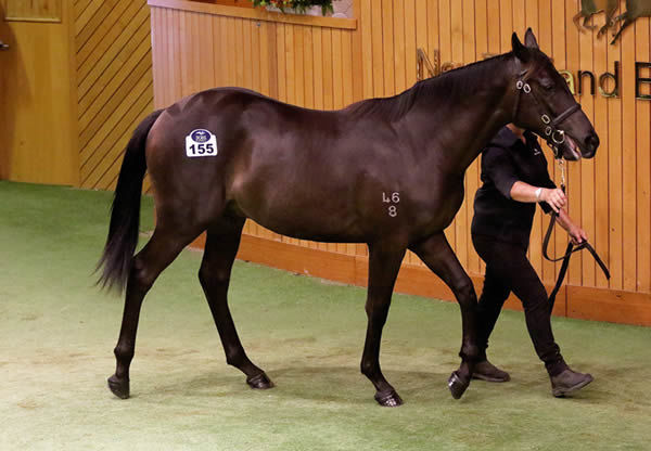 $900,000 Pierro colt from Our Squeezer