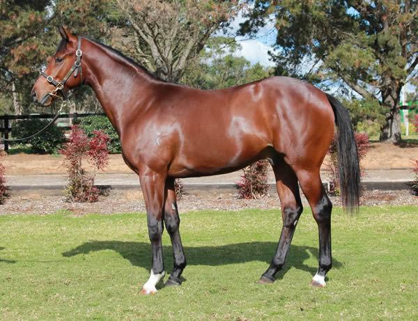 $180,000 Toronado colt from Settecento was a huge pinhook winner purchased as a weanling from Etak