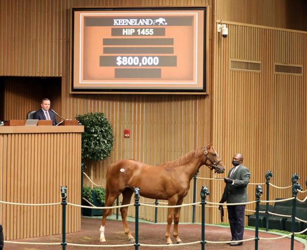 $800,000 Curlin colt from Divine Elegance.