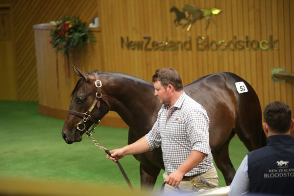 Te Akau Principal David Ellis purchased Lot 52 for $625,000 out of Woburn Farm's draft. Photo: Trish Dunell