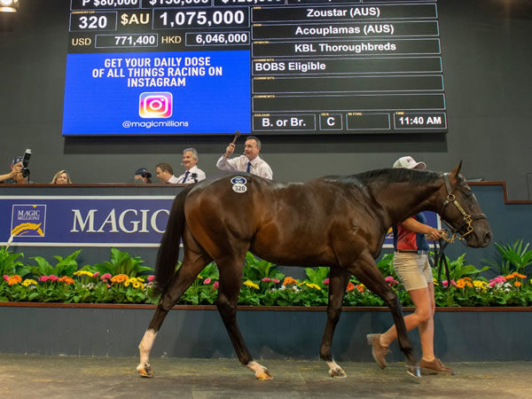 Yulong Code was a sale ring star at the Gold Coast in 2019