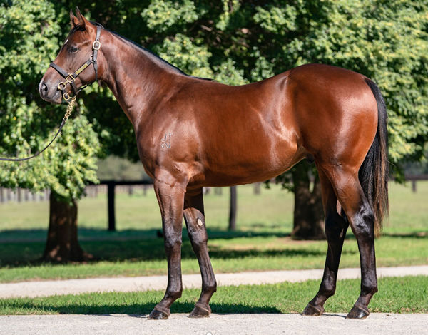 $1.1million Zoustar colt from Solar Charged