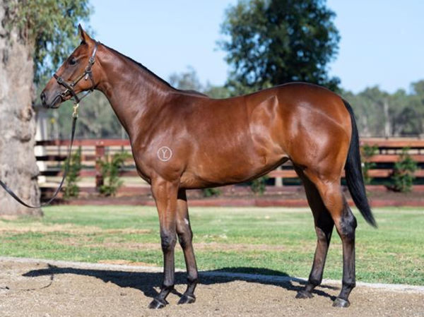 Divine Diosa was bred and sold as a yearling by Yulong