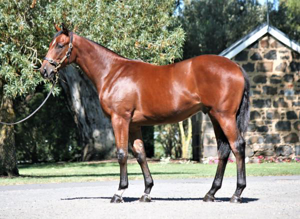 Efflorescence was a $510,000 Easter Yearling