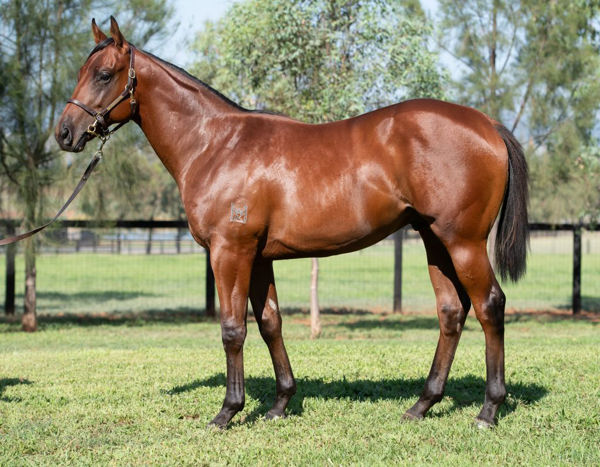 Encountabull as a yearling - his father's son