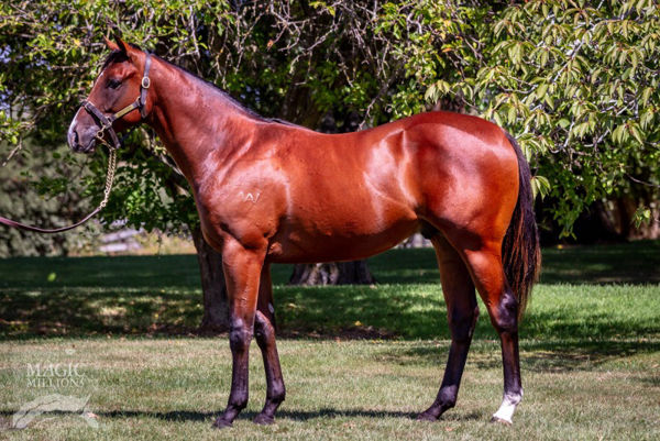 Extra Time was a $140,000 MM Adelaide Yearling