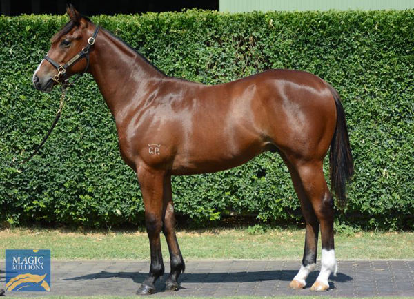 Extreme Warrior a $160,000 Magic Millions Yearling