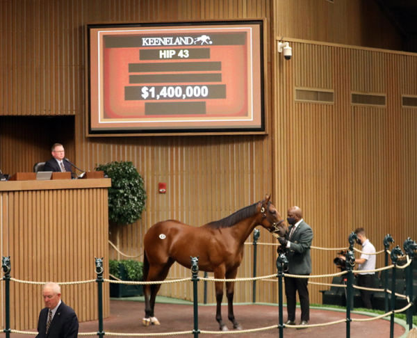 $1.4million American Pharoah filly - Image Keeneland