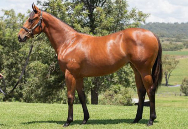 $300,000 Hellbent filly from Crystal Rock.