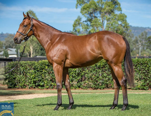 $500,000 Hellbent filly from Jalan Jalan.